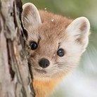 🌲森の小動物ショップ🌲  🛒 ( smallanimal )