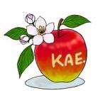 Kae-Illust ( kae-illust )