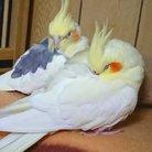 美雨〈小鳥ちゃんLove×2🐥〉 ( MiLlJLvJxvaze3r )