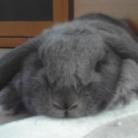 538_ショウ兎 ( Prize_Rabbit )