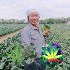 青山哲也 非営利非合法大麻農家 ( bultraman )