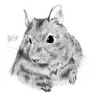 POLEPOLE〜北の森のお絵描き屋さん〜 ( ktothelyla87 )