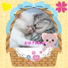ScS♏️子猫💕セブン♏️ ( SEVENFENNEC )