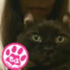 黒猫クウガ ( kuroneko_kuga )