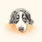 愛犬描処 プルーデンス ( Illustrator_TELL )
