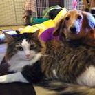 #保護猫 Masako Sobue ( mashiro_ponzu )
