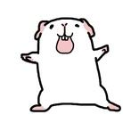 モルモット屋さん 時々違う ( onico8717 )