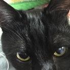 黒猫と風船 ( chatnoir )