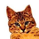 Elegant  Cat ( Elegant_Cat )