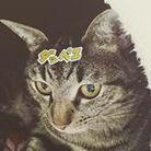 可愛いお店 ( cat_niku )