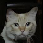おだちゃんと7匹の猫たち ( oda_neko )