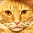 太々しい猫、玉三郎。 ( band_tamasaburou )