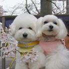 ichigo&nico ( ichigomama2525 )