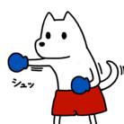 森山慎のいぬボクサーやさん ( sin_moriyama )