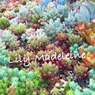 Lily-Madeleine ( lilymadeleine1111 )