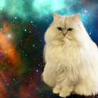 大変かわいらしい猫のグッズ屋さん ( Unmatchablewasabi )