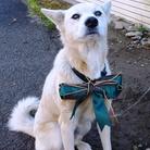 雑種犬(第三の犬) ( kazuchu5inu )