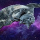 とうふ猫 ( mobhk )