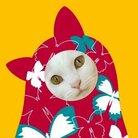 保護猫支援ショップ・パール女将のお宿 ( pearl_okami )
