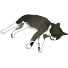 たんたん保護猫グッズ ( tantanpet )