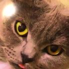 猫神様のいる店『SHRIMO』 ( goma_mio )