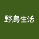 野鳥生活 ( Yachoo_Seikatsu )
