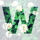 wavisavi