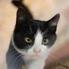 白黒猫MAXI 13 ( vonfu113 )