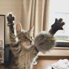 猫は正義 ( 56donguri56 )