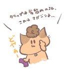 チコ ( chiko0731 )
