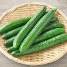 きゅうり ( cucumber555999 )