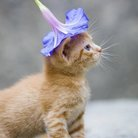 猫好き小説家志望者 ( noisy )