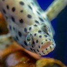 アル@水族館で魚を撮ろう🦈📷 ( RA_aquapicture )