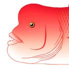 【魚類】おさかなちゃん☆図鑑 ( osakanachan )