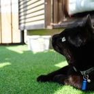 黒猫のヴィーヴィ ( azi9pbkkp )