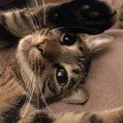 昭和猫 ( Heisei )