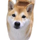 kawaii柴犬
