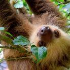 sloth ( ngokkt )