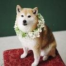 芝犬ゆき ( yukitaroou )