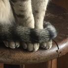 猫雑貨⁂ヘンテコ ( RuruDaifukumame )