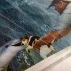 海豚に食べられし者 ( 4242564tto_ )