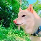 本日のおだしま ( odashima )