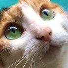 無限猫マットは聖剣3ToM満喫中 ( execflipuni )
