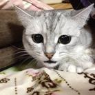 """""""chuna × kochi"""" cats shop ( 34_miho-iida )"""