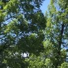グリーンウィンド ( green-wind )