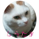 ねことお休みどころ しらたま ( shiratama_net )