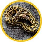 Reptile_TK