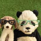 PANDA panda LIFE*** ( panda-life )