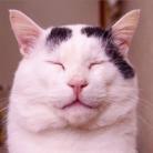 うちの猫ら 2号店 ( uchinonekora-2 )