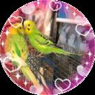 凛とハル虹の橋で楽しく遊んでると良いなぁ@キラとラスクのアホアホ飼い主 おちりが好物 ( miyako1206 )